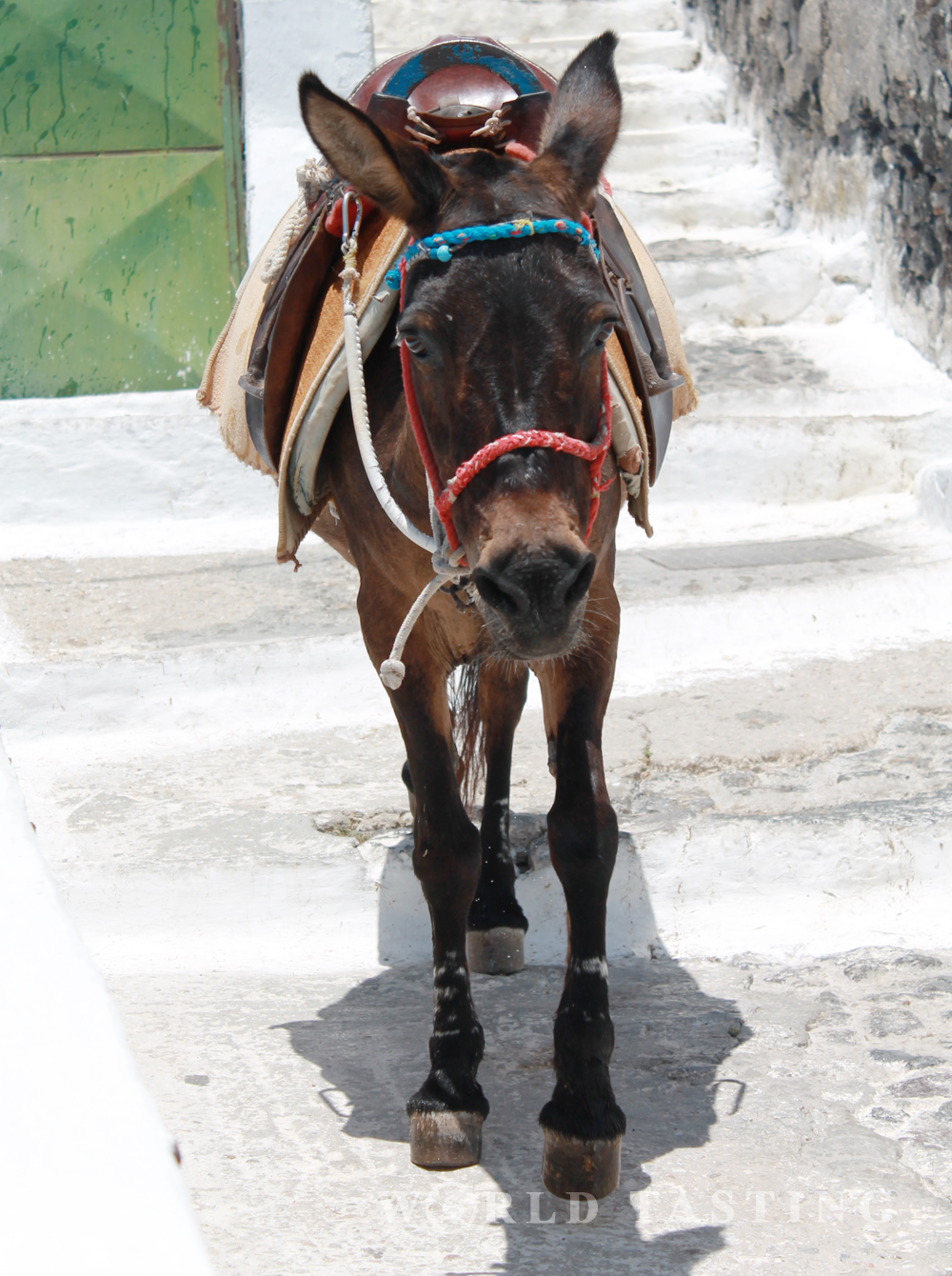 The donkeys are one of the main transportation means on the island of Santorini